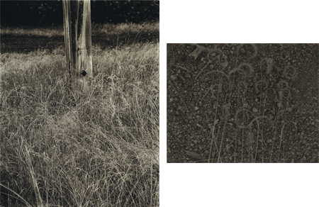 Stieglitz, Grass and Flagpole, 1933 and Sommer, [Grass and Ground], 1935
