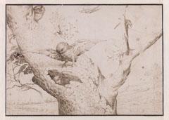 Hieronymus Bosch, 'The Owl's Nest', c. 1505-1515, pen and brown ink, Museum Boijmans van Beuningen, Rotterdam