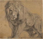 rubens-drawing