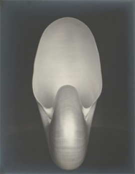 Edward Weston American, 1886–1958 Shell 1 (Nautilus), 1927 Gelatin silver print National Gallery of Art, Washington, Gift of Agnes S. Wolf