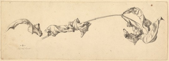 Julius Schnorr von Carolsfeld, German (1794–1872) 'A Branch with Shriveled Leaves', 1817 pen and black ink over graphite on wove pape. Private collection