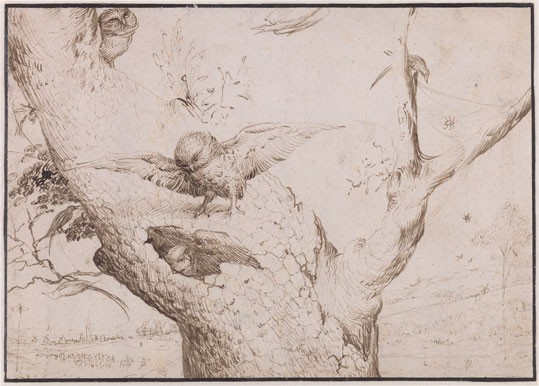 Hieronymus Bosch, The Owl's Nest, c. 1505/1515, pen and brown ink on paper, laid down. Museum Boijmans Van Beuningen, Rotterdam