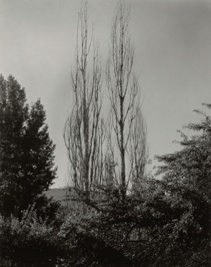Poplars—Lake George